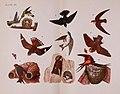 Birdcraft (Plate III) (6810527448).jpg