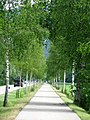 Birkenallee b Immenstadt GO-1.jpg