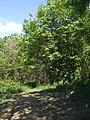 Bivio per il sentiero abbandonato che conduceva alla Croce di San Valentino - panoramio.jpg