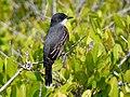 Black Point Wildlife Drive, Merritt Island FL - Flickr - Rusty Clark (76).jpg