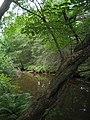 Bloomfield Provincial Park IMG 8223 (1849031804).jpg
