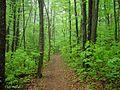 Blue Ridge Smart view 11-5-09 - panoramio - Bas van Oorschot.jpg