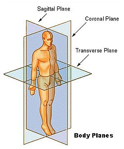 Parasagittal Plane Vs. Midsagittal