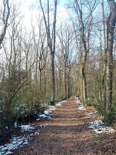 Bois du Bousquet