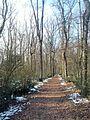 Bois du Bousquet - 2015-02-07 14-14-39.jpg