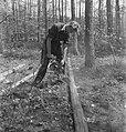 Bosbewerking, arbeiders, boomstammen, werkzaamheden, zagen, Bestanddeelnr 251-8479.jpg