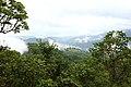 Bosque Eterno De Los Ninos 01.jpg