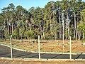 Bosque do Jardim Botânico - panoramio.jpg