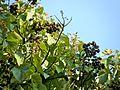Botanični vrt (3990153999).jpg