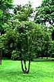 Botanic garden limbe66.jpg