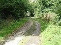 Bratt Wood - geograph.org.uk - 59113.jpg
