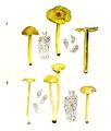 Bresadola - Hygrophorus chlorophanus und vitellinus.png