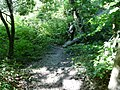 Bridge over small stream in Oaks Nook wood - geograph.org.uk - 938994.jpg