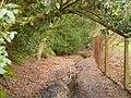 Bridleway in Jelleys Hollow - geograph.org.uk - 1777004.jpg