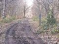 Bridleway in Mereworth Woods - geograph.org.uk - 1200108.jpg