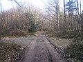 Bridleway in Roadside Wood - geograph.org.uk - 1200188.jpg
