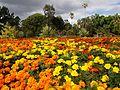 Brisbane City Botanic Gardens (03).jpg