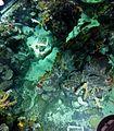Bristol Aquarium - panoramio (7).jpg