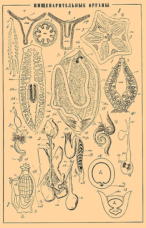 Brockhaus and Efron Encyclopedic Dictionary b46 758-0.jpg