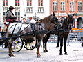 Brugge (Bruges) horses.jpg