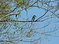 Burung 2.jpg