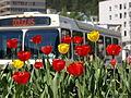 Bus 5190011.JPG