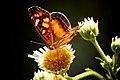 Butterfly (2266875033).jpg
