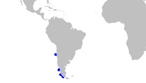 Bythaelurus canescens distmap.png