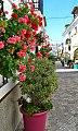 Calle figueroa pots - Estepona Garden of the Costa del Sol.jpg