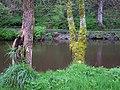 Camowen riverbank,Omagh - geograph.org.uk - 1270959.jpg