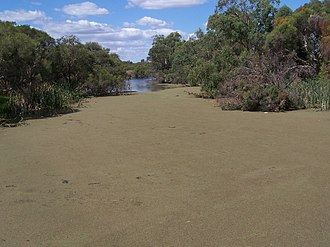 Azolla - Azolla covering the Canning River, Western Australia