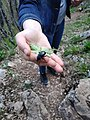 Carabidae, Coleoptera 01.jpg