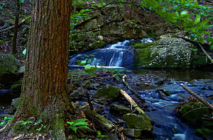 Tillman Brook, Stokes State Forest, Sussex County.