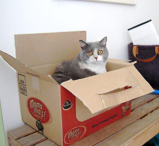 Cat in a big box