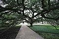 Century Tree.jpg
