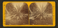 Century plant. Dummett's grove, from Robert N. Dennis collection of stereoscopic views.png