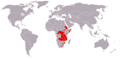 Cercopithecus mitis distribution map.png