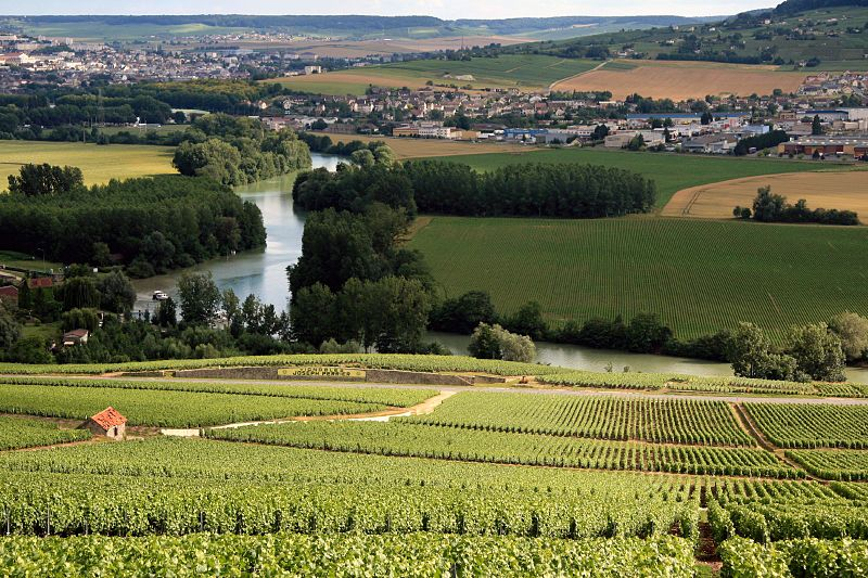 Fichier:Champagne Vineyards.jpg
