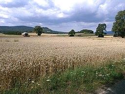 Wheat fields behind Besse