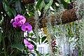 Chemnitz botanischer garten orchideen 2.JPG