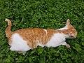 Chiang Mai kitties - 2017-07-09 (006).jpg