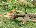 Citadelle de Besancon jardin zoologique 08.jpg