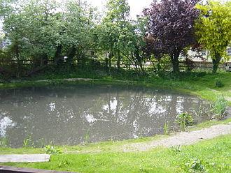 Clanfield, Hampshire - Clanfield Pond