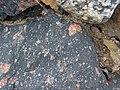 Clast-rich impact pseudotachylite (Sudbury Breccia, Paleoproterozoic, 1.85 Ga; Windy Lake Northwest roadcut, Sudbury Impact Structure, Ontario, Canada) 58 (46841734765).jpg