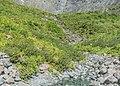 Cleddau River South Branch NZ.jpg