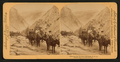 Climbing the Rockies, California, U.S.A, from Robert N. Dennis collection of stereoscopic views.png