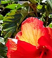 Close Up Flowers (48130710572).jpg
