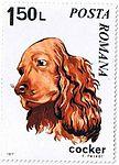Cocker-Spaniel-Canis-lupus-familiaris Romania 1971.jpg