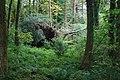 Coed ger Llyn Glasfryn - Wood near Llyn Glasfryn - geograph.org.uk - 543329.jpg