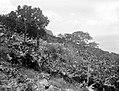 Collectie Nationaal Museum van Wereldculturen TM-10021362 Gewassen en bomen op een rostachtige berhelling Saba -Nederlandse Antillen fotograaf niet bekend.jpg